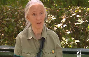 Ver v?deo  'Entrevista a Jane Goodall'