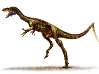 Ver vídeo  'El Eodromaeus, el pariente diminuto del 'Tyrannosaurus rex''