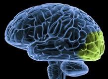 La esquizofrenia tiene su origen las alteraciones de algunas sustancias químicas del cerebro