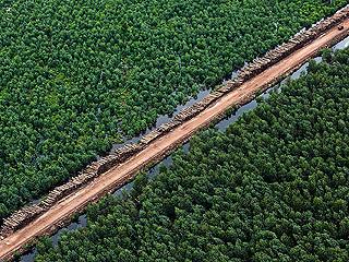 Ver v?deo  'Este 2011 es el año internacional de los bosques'