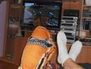Un perro mirando la Vuelta por la tele