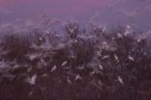 Foto de Fernando Ortega en el momento en que una bandada de pájaros intuye un peligro y están a punto de echarse todos a volar