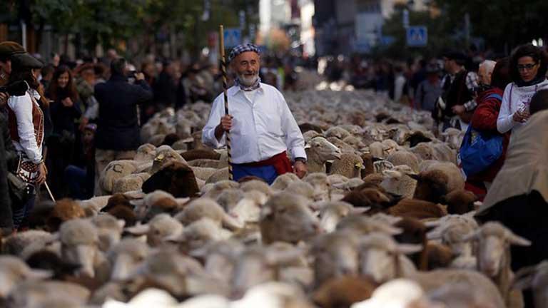 La Fiesta de la Trashumancia reivindica las vías pecuarias en el centro de Madrid