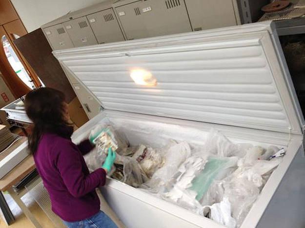 Fotografias conservadas en un congelador para restaurar tras ser rescatadas de los escombros en el pueblo japonés de Ofunato.