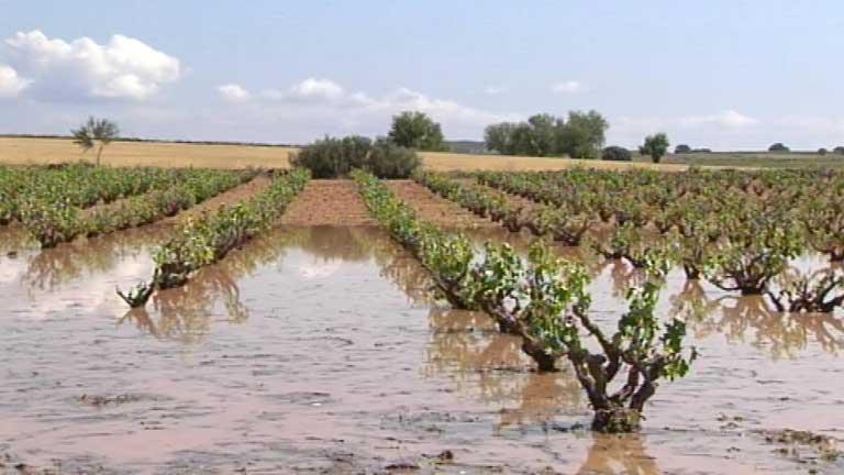 Las fuertes tormentas de lluvia y granizo han dejado numerosos daños en el campo