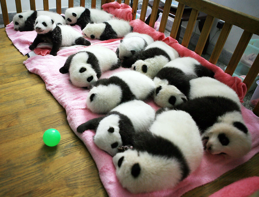 La guardería de pandas