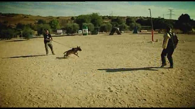 UNED - El guía canino. Nuevos métodos y técnicas de adiestramiento para perros de trabajo - 30/09/11
