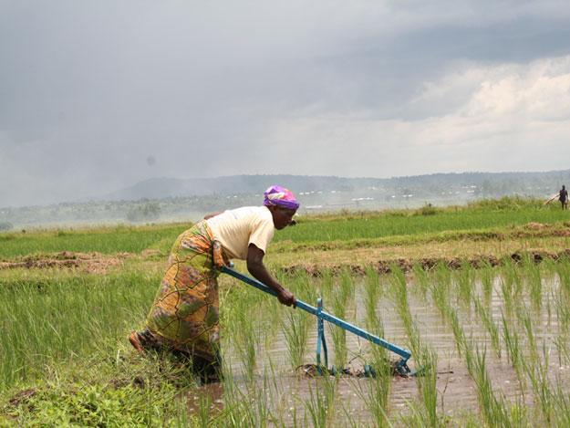Los habitantes de Makamba, en Burundi, recuperan las marismas para los cultivos
