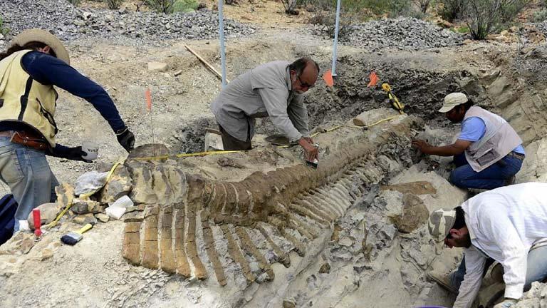 Hallan la cola articulada de un hadrosaurio en México