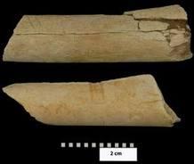 Los dos fósiles de huesos con marcas que han llevado a los científicos a afirmar que los homínidos ya utilizaban herramientas hace más de tres millones de años