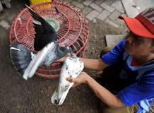 Un hombre de 24 años murió el pasado 10 de enero en Yakarta a causa de la gripe aviar. Es el tercer caso de muerte en tres meses, según Afp.