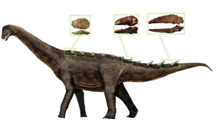 Ilustración de la reconstrucción de la armadura dérmica de los saurópodos titanosaurios