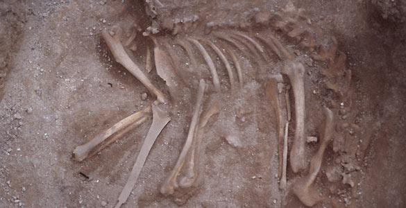 Imagen del fósil del esqueleto de perro de hace 7.000 años encontrado en Siberia