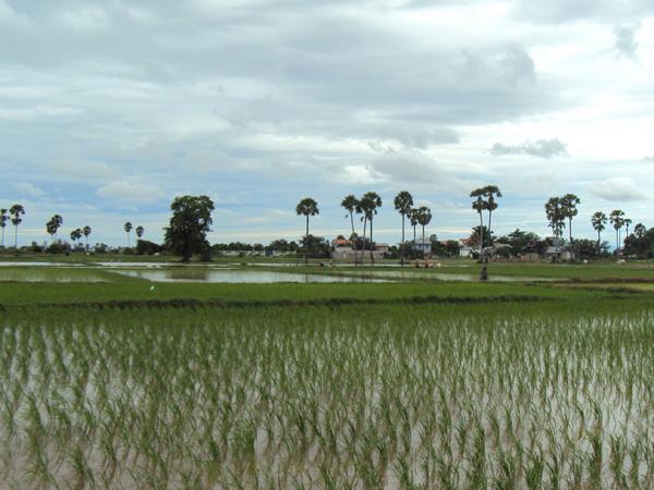 Impresionantes paisajes de campos de arroz - Buscamundos