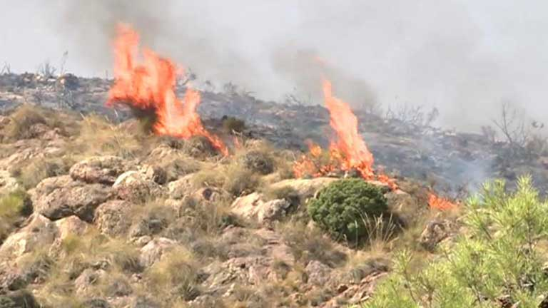 1.000 evacuados desde anoche por el incendio de Bedar, Almería