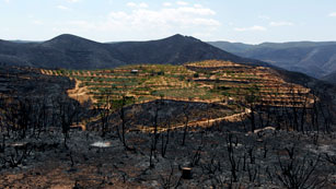 Ver vídeo  'El incendio de Valencia, un desastre medioambiental, económico y ecológico'