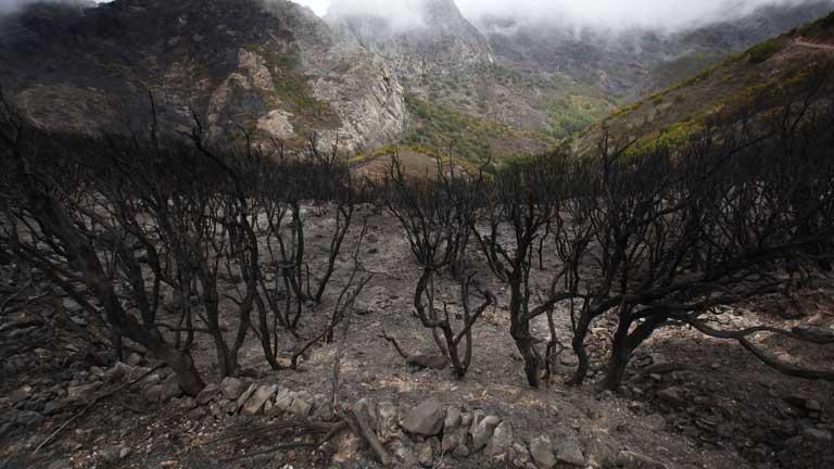 Siguen activos los incendios de La Gomera y La Palma