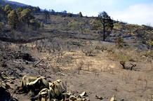 INCENDIOS FORESTALES EN LA PALMA