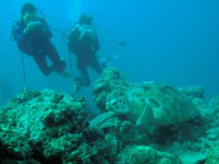 Ver v?deo  'Informe semanal - Jacques Cousteau'