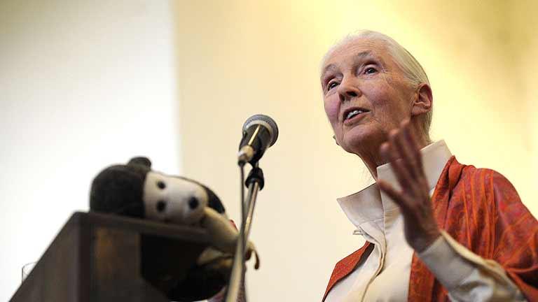 Jane Goodall, la prestigiosa primatóloga, visita España
