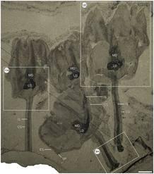 Distintos tamaños y especímenes de los fósiles localizados