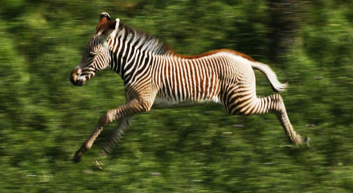Imágenes de animales que corren - Imagui