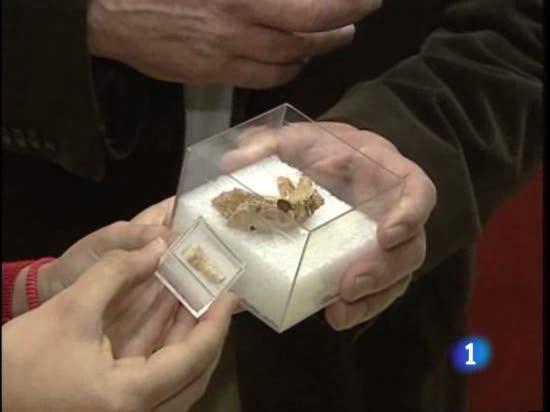 Una mandíbula de Atapuerca puede desestabilizar las bases de la evolución humana