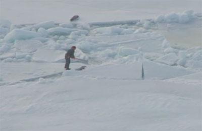 Prosigue la matanza de focas en Canadá