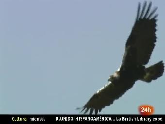 Ver v?deo  'NATURAL: 2010, el Año de la Biodiversidad'
