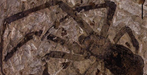 La 'Nephila Jurassica', el fósil de araña más grande jamás descubierto