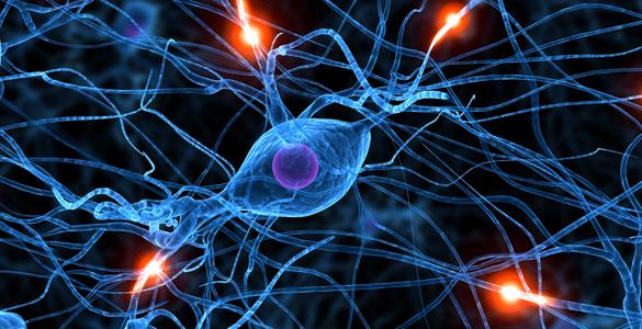 El zinc es fundamental para que las moléculas encargadas de transferir la información funcionen correctamente