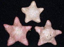 Esta nueva especie de estrella de mar 'Marginaster' fue la primera de las especies de aguas profundas descubierta en Australia de su género