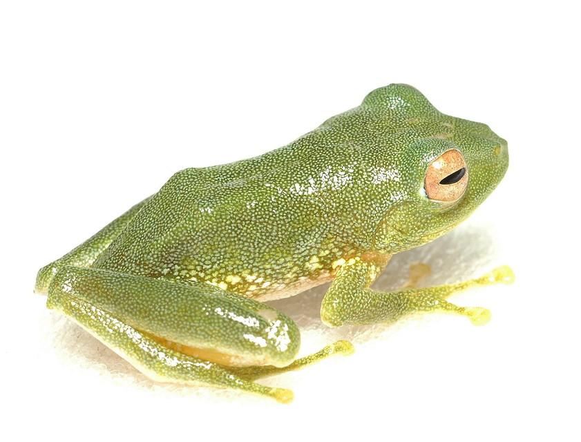 Las nuevas ranas de Filipinas