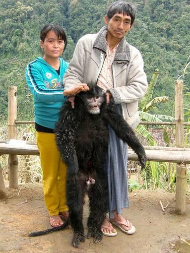 El nuevo 'mono de nariz chata' matado para ser comido por cazadores locales