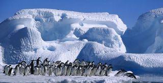 Ver vídeo  'On Off: Los pingüinos frente al deshielo'