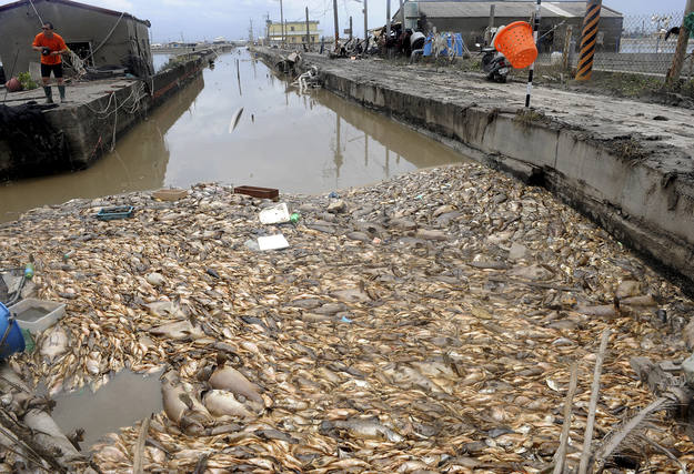 Peces muertos flotan en la superficie del agua de una piscifactor&iacute;a en Pingtung