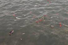 Los peces, principales víctimas en El Hierro