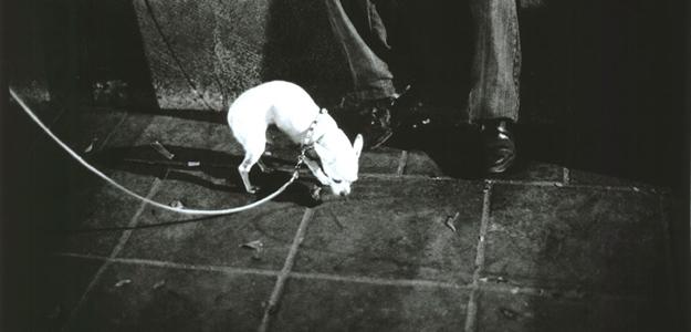 Perro chihuahueño retratado por Jessica Lange, una de las imágenes de 'Secuencias de Mexico'