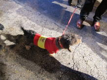 Un perrito vestido con una camiseta de Espa&ntilde;a en la sede del PP en G&eacute;nova.