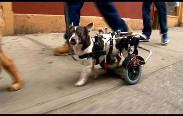 Los perros forman parte del paisaje urbano de Nueva York; se calcula que hay un millón de canes, 300.000 solo en Manhattan - Buscamundos