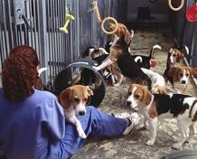 Perros sometidos a la experimentación con animales