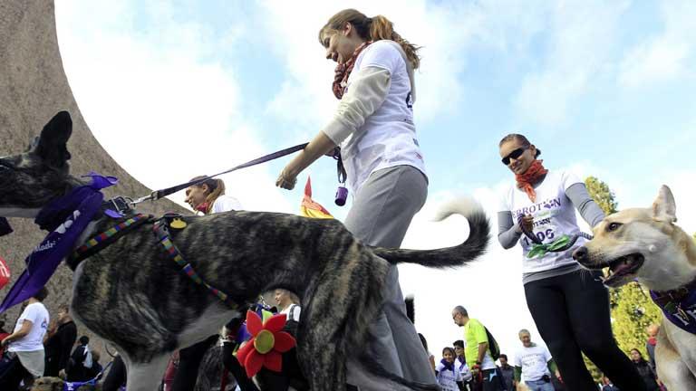 """Cientos de perros y sus dueños participan en Madrid en el """"Perrotón 2013"""""""