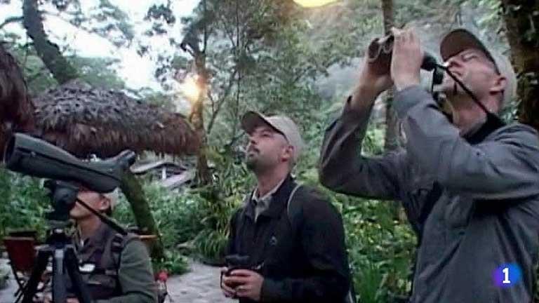 Perú promociona el turismo ornitológico, es el segundo país en diversidad de aves