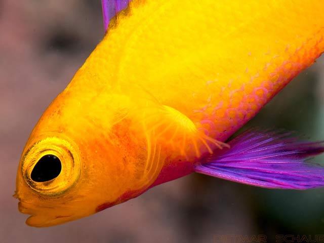 Las especies marinas suponen 2,2 millones del total de especies que viven en el planeta, casi el 25%