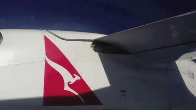 Una pitón en los flaps de un avión