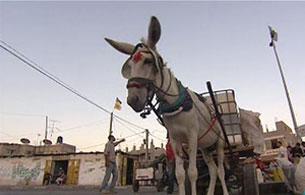 Ver vídeo  'En portada - Los 'Plateros' de Gaza'