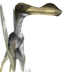 Un diminuto fósil (13 milímetros) ha revelado la gigantesca envergadura de los pterosaurios