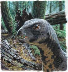 Qantassaurus intrepidus vivió hace 115 millones de año en los bosques del suroeste de Australia. Por aquel entonces allí había coníferas y ginkgos. Aún no habían aparecido las plantas con flor.