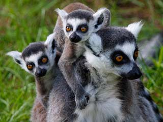 Ver vídeo  'La quinta parte de los animales vertebrados están en peligro de extinción'