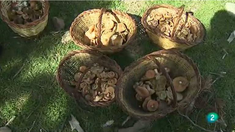 Agrosfera - En clave rural - Recolección de setas